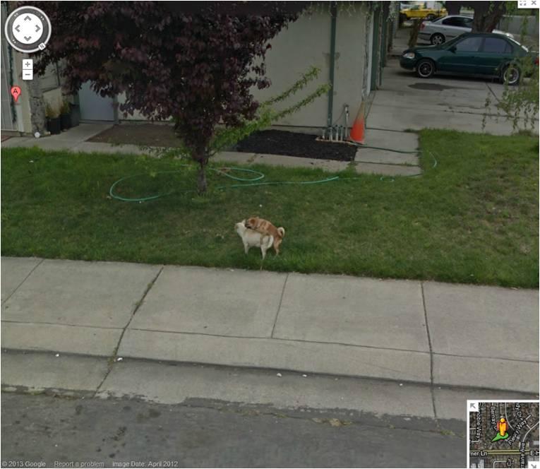 street-view-cachorros